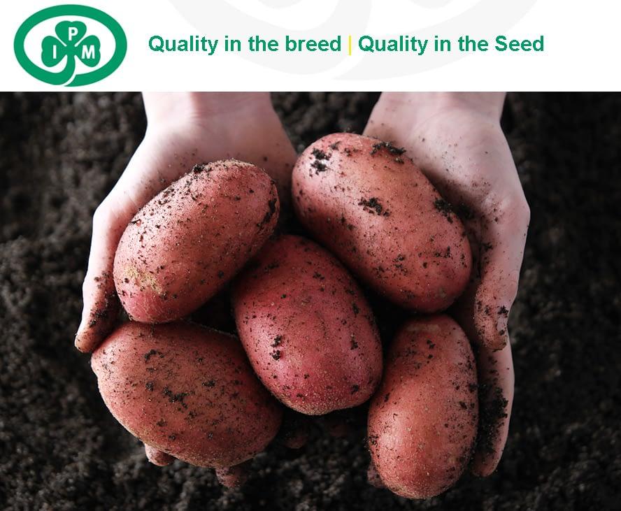 Photographer Dublin, Advertising, potato, hands, farm, soil